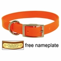 3/4 in. Day Glow Standard Puppy / Small Dog Collar