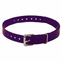 buy discount  3/4 in. Violet Replacement Collar Strap