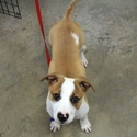 buy discount  Alexis' Dog Buddy (Jack Russell Mix)