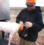 shop ARTICLE: Introducing Your Dog to the Remote Beeper