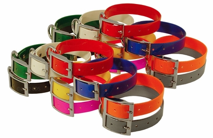 Beagle 1 in. Field Trial Dog Collar Combo Pack