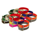 shop Beagle 1 in. Field Trial Dog Collar Combo Pack