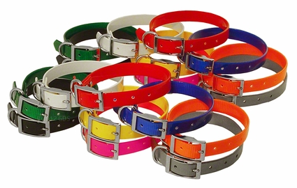 Beagle 3/4 in. Field Trial Dog Collar Combo Pack