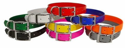 Beagle 3/4 in. Field Trial Dog Collar Pack