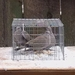 Birds in PT2412/KD Pigeon Trap