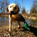"buy discount  Customer Photo: Eric Teson's dog Ammo with ""an old but durable Dokken Mallard."""