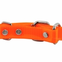 buy discount  3/4 in. Day Glow D-End Puppy/Small Back of Buckle Detail