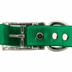 shop 1 in. Day Glow Standard Dog Collar Back of Buckle Detail