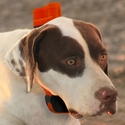 buy discount  Delta Upland XC on Dog
