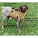 Dog Broad Chest Vest In Use w/ Diagram