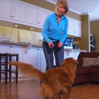 buy discount  Dog Tricks: How to Teach Your Dog to Walk Backwards