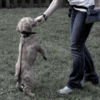 buy discount  Dog Tricks: Teaching Your Dog to Dance