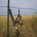 buy discount  Dove Quail Holder Lifestyle on fence