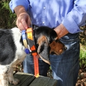 buy discount  Garmin Astro T5 Collar on a Beagle