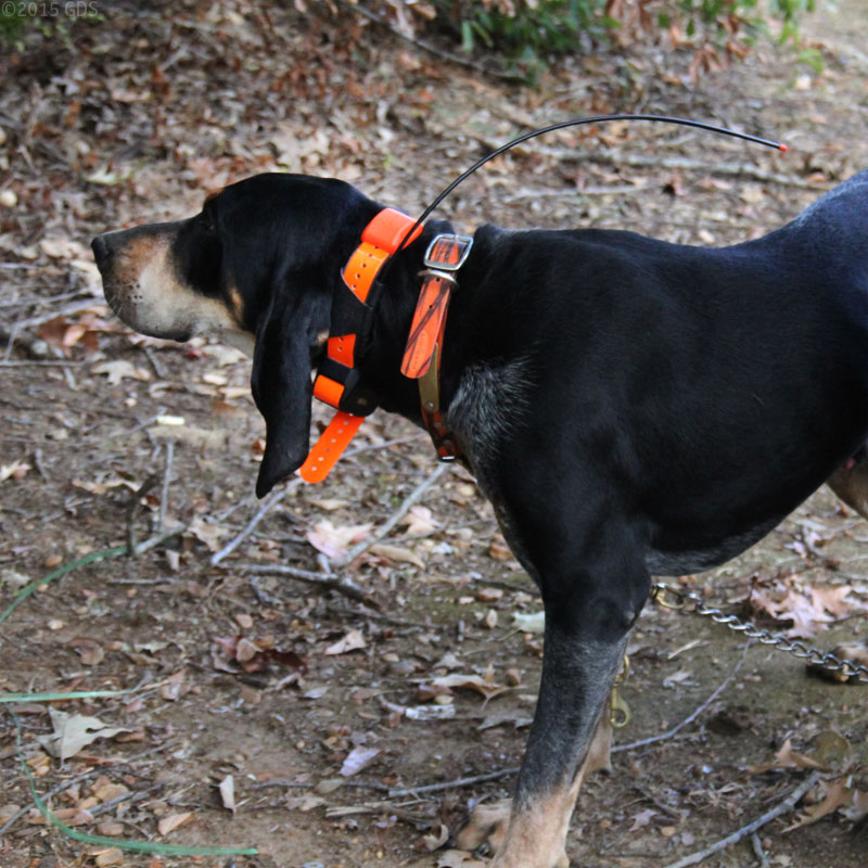 Best Gps For Hunting Dogs