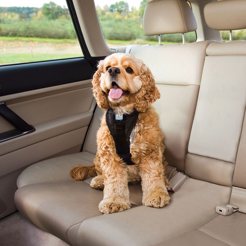 Large Dog Car Harness Reviews