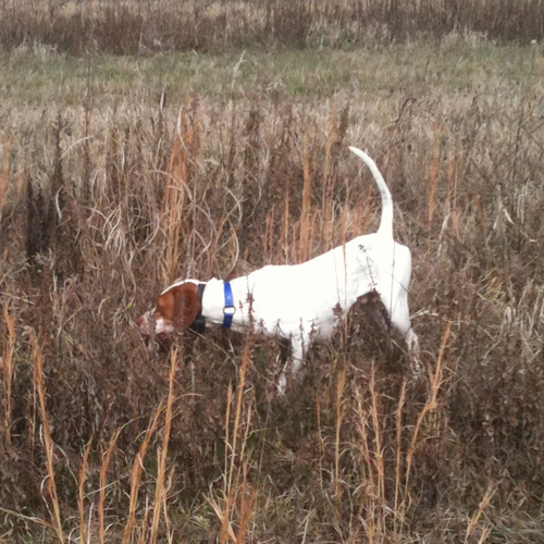 Mac (Pointer)