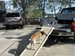 PetSTEP Attached to Tailgate
