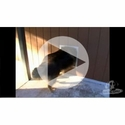 buy discount  VIDEO: Plexidor Dog Doors Testimonials