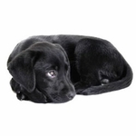 shop Puppy Training Supplies & Puppy Products
