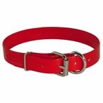 shop Red D-End Day Glow Collar