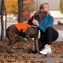 buy discount  Reflect and Protect Dog Vest In Use