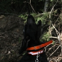 buy discount  Reflective Center Ring Collar on a Hound