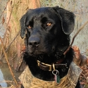 buy discount  Retriever Hunting and Training Supplies