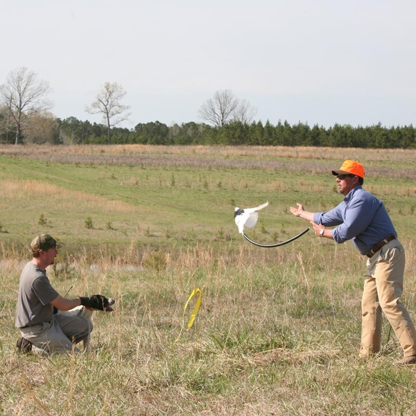 Bird Dog Training Seminars