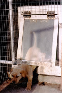 Special Dog Door Training for the Timid Dog