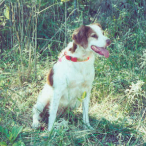 Starr (Brittany)