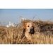 Tanglefree Flight Series Dog Blind with Lab in the Field