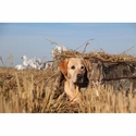 buy discount  Tanglefree Flight Series Dog Blind with Lab in the Field