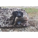 Tanglefree Little Buddy Dog Blind with Black Lab