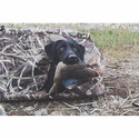 buy discount  Tanglefree Little Buddy Dog Blind with Black Lab