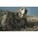 Tanglefree Little Buddy Dog Blind with Yellow Lab