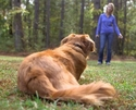 buy  Three Things You Must Know to Have a Reliably Trained Dog
