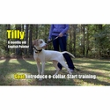 buy discount  TILLY
