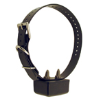 shop Using Remote Training Collars in Saltwater