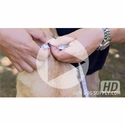 buy discount  VIDEO: How To Measure Your Dog's Neck For A Collar