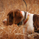 """shop """"Why I'm Excited about GPS for Bird Hunters"""" -- Steve"""