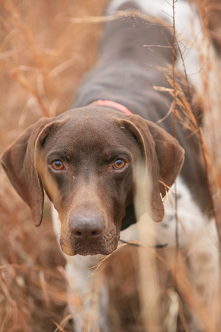 Why Shop with Gun Dog Supply?