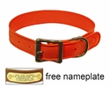 "WigWag 1"" Medium Dog Collar -- Fits 14-19"" Neck"