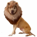 Animal Planet Lion Dog Costume - Large