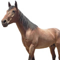 Horse & Livestock Products