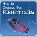 How to Choose the Perfect Dog Collar