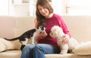 How to Keep Your Pet Calm and Comfortable This Holiday Season