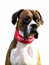 Kool Collar Stop Sign Red (Large)