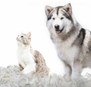 Shed Control for Pets