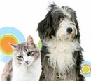 The Importance of Ear and Eye Care for Pets